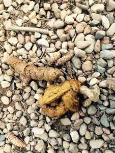 When Your Dog S Poop Looks Like This Visit Your Vet
